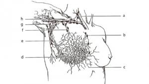 Manuální lymfodrenáž
